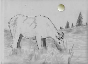 Mountain Goat by YoungJun