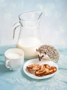 Hedgehog and breakfast