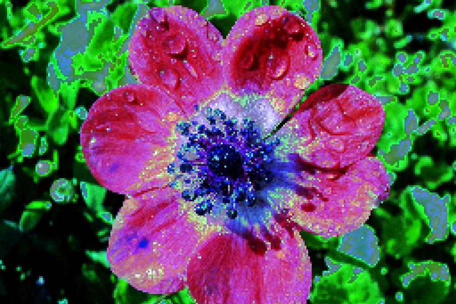 Flower by AshxSquirrelGone