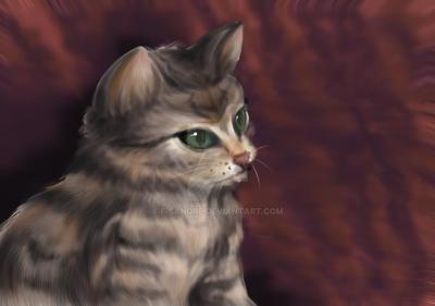 +Little Cat+ by f-sangre
