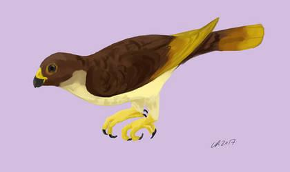 Messelastur the carno-parrot by Inmyarmsinmyarms