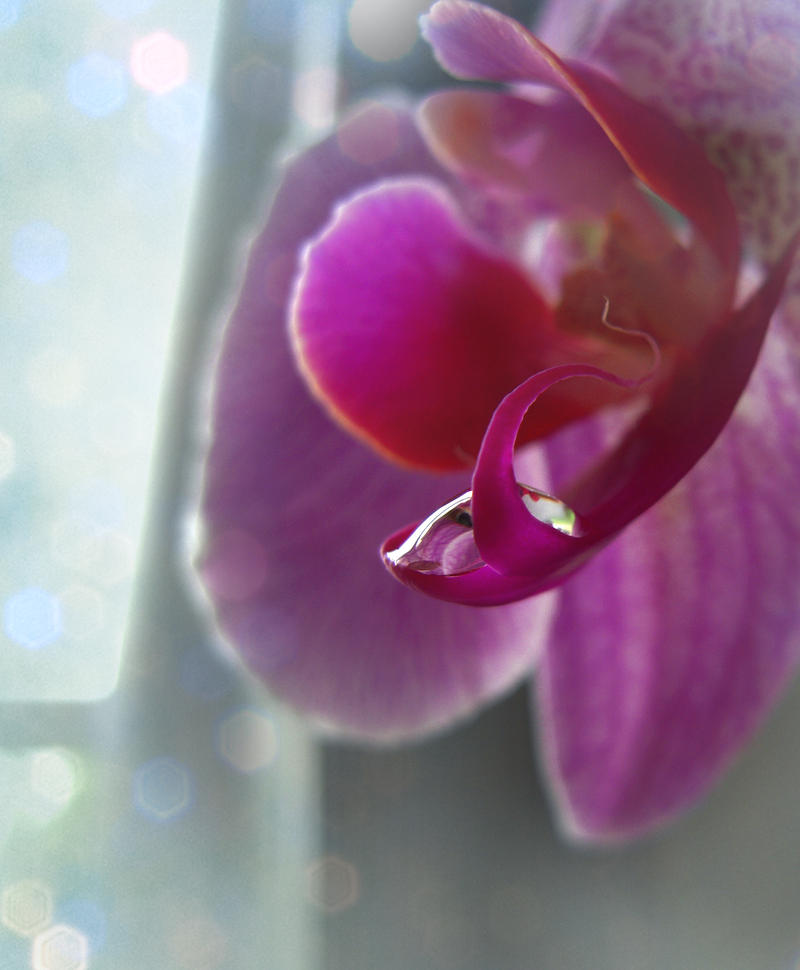 Water Drop - Orchid by Sugargrl14