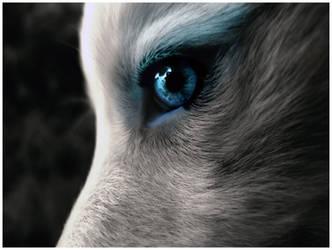 Wolf by Sugargrl14