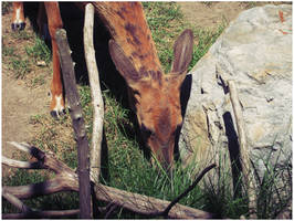 Deer by Sugargrl14