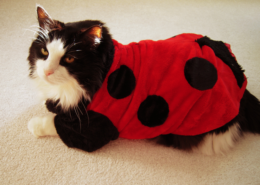Ladybug Cat by Sugargrl14