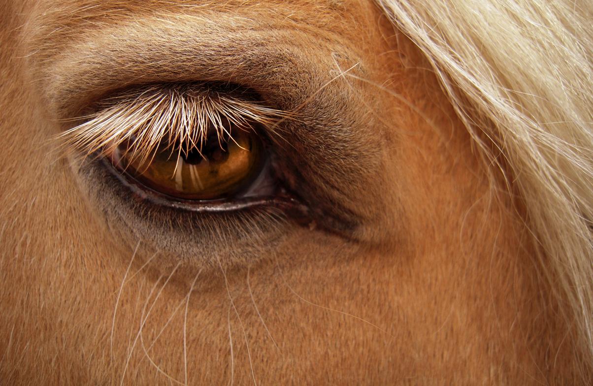 http://fc07.deviantart.com/fs35/f/2008/306/6/f/Horse__s_Eye_by_Sugargrl14.jpg