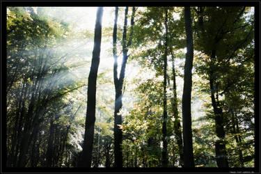 Autumn sun by lost-update