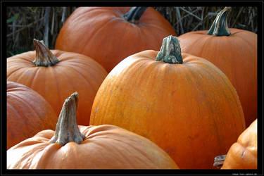 Halloween pumpkins by lost-update