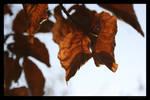 Brown leaves 2 by lost-update