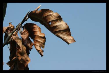 Brown leaves 3 by lost-update