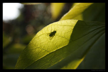 Fly sitting on a leaf by lost-update