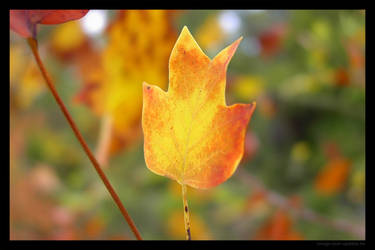 Red yellow leaf by lost-update
