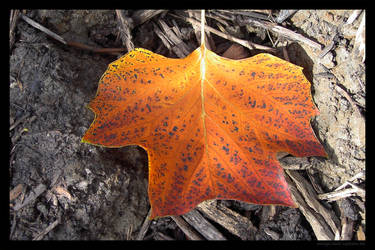 Red yellow leaf 2 by lost-update