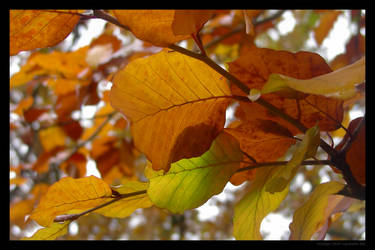 Red yellow leaves 3 by lost-update