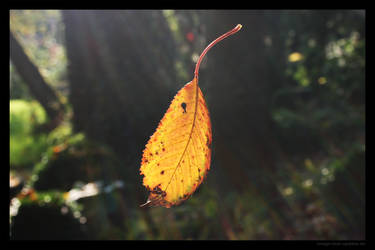 Red yellow leaf 4 by lost-update