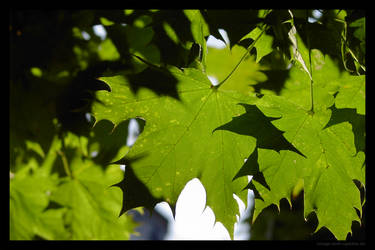 Green leaves 2 by lost-update