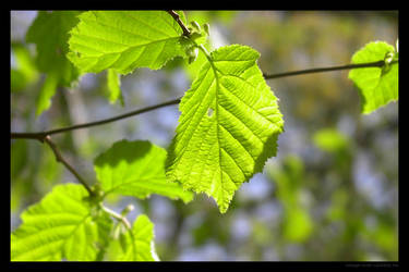 Green leaves 3 by lost-update