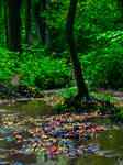 Forest by Telais