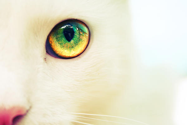 The cat by iCECREAMTRUCKFUCK