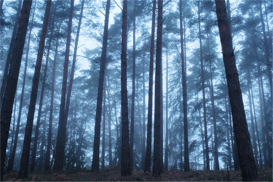the fog II by iCECREAMTRUCKFUCK