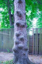 Bumpy Alien Tree