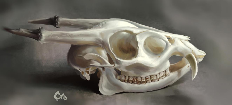 Study 04 Skull by MilicaClk