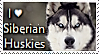 Siberian Husky Stamp by TheMoonRaven