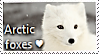 Arctic Fox Stamp by TheMoonRaven