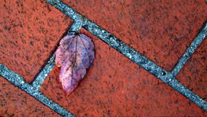 leaf on brick