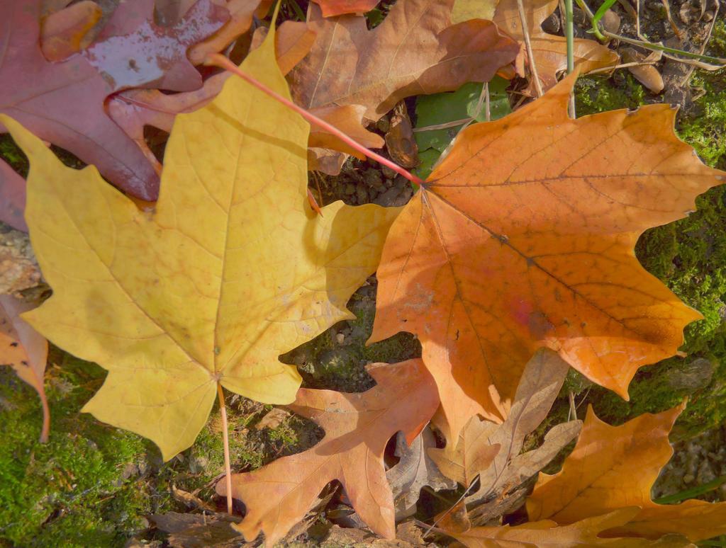 Fall 2014-11 by jerryscot