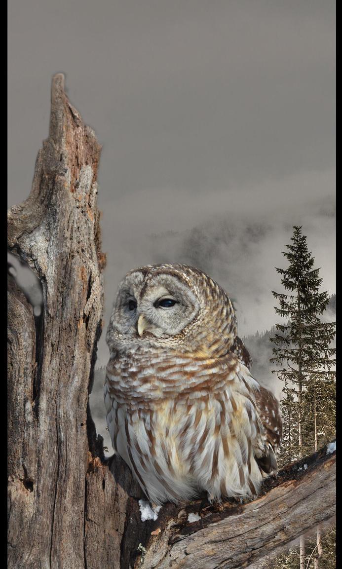 Winter owl by jerryscot