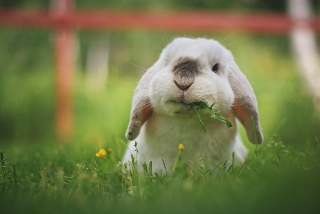 Happy Bunny by Exempeel