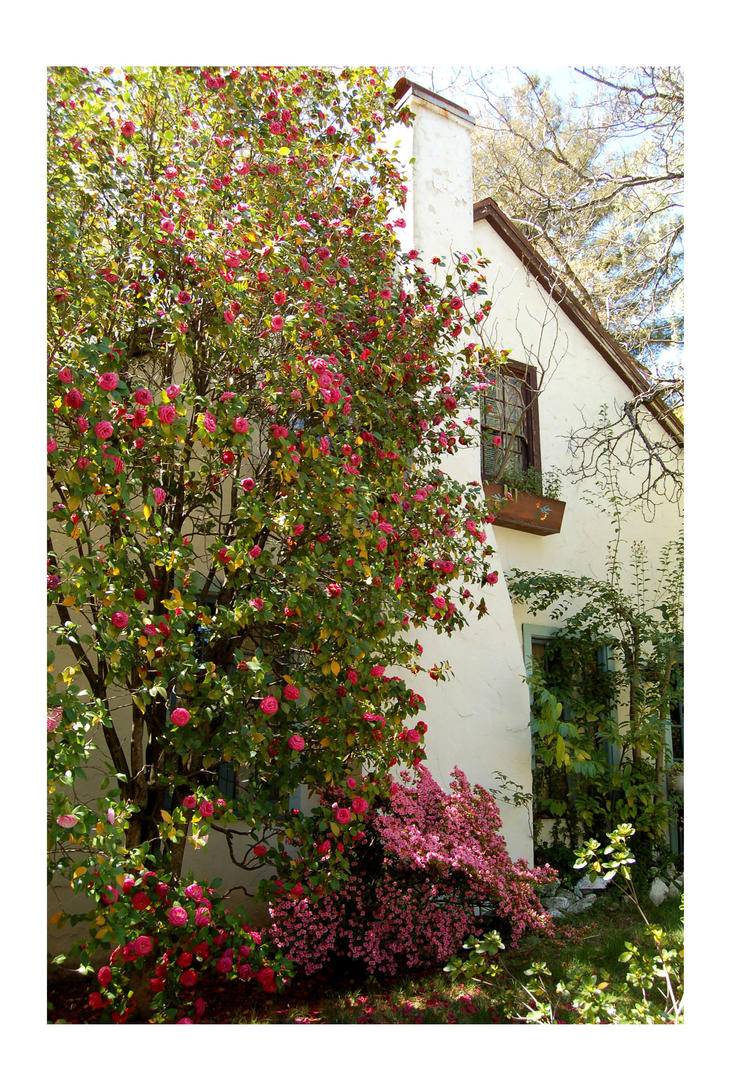 Cottage Blooms by scatteredspecks