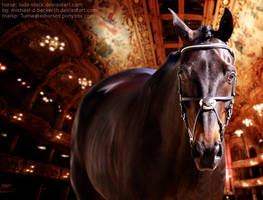 King of the Dance Hall by CrowsNestPhotography