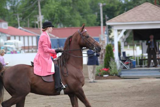 Saddlebred Saddleseat Stock