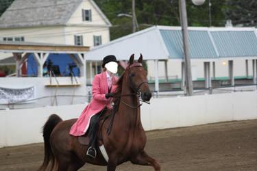 Saddlebred Saddleseat Stock 2