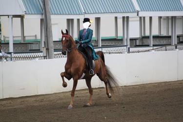 Saddlebred Saddleseat Stock 3