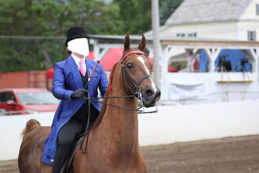 Saddlebred Saddleseat Stock 4 by CrowsNestPhotography