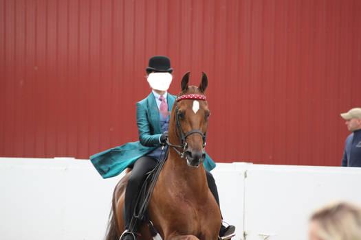 Saddlebred Saddleseat Stock 5