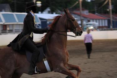 Saddlebred Saddleseat Stock 8