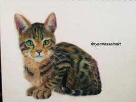 Cat color pencil drawing by Ryan-Hossein