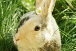 Flower bunny by likos