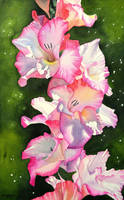 Gladiolus by Shelter85