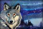Wolf Christmas card by Shelter85