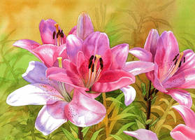 Pink lilies by Shelter85