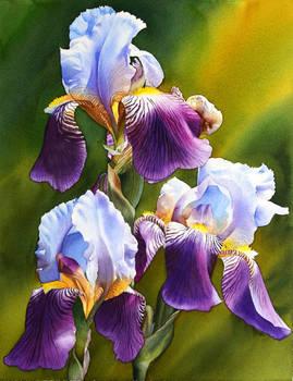 Sunny Iris