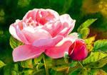 Tales from the Czech rose garden