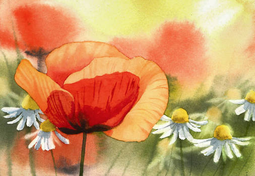 Poppy and camomiles