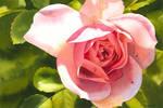 Whisper of a rose