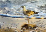 Seagull in the Golden Afternoon